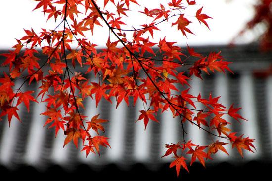 紅葉は盛り 曼殊院、2_e0048413_21385977.jpg