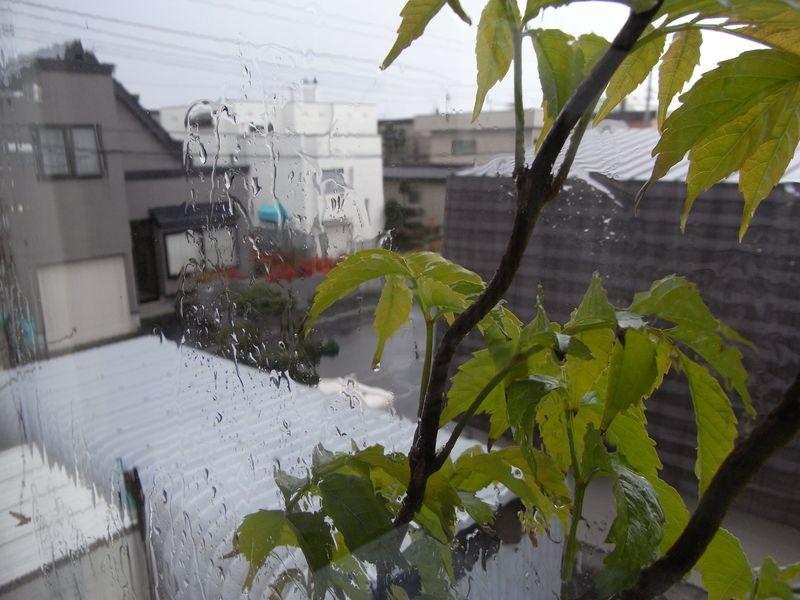 雨の札幌_c0025115_2135934.jpg