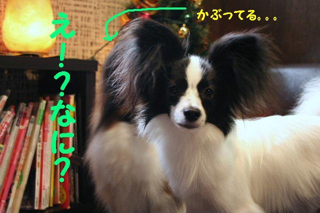 かぶってる!!&たのしぃ~~~~♪_b0130018_13141090.jpg
