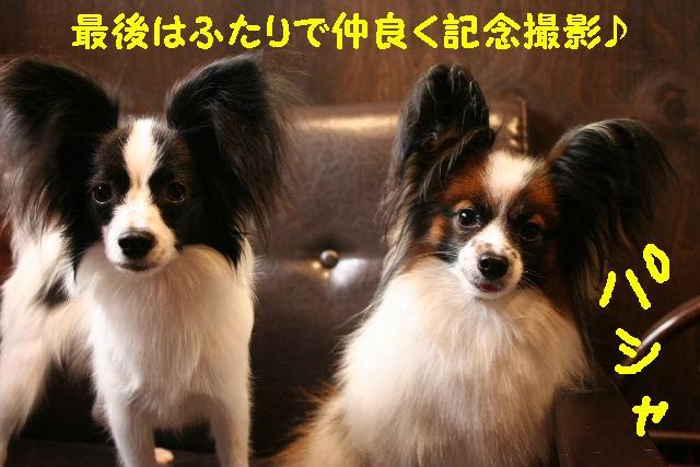 かぶってる!!&たのしぃ~~~~♪_b0130018_13142171.jpg