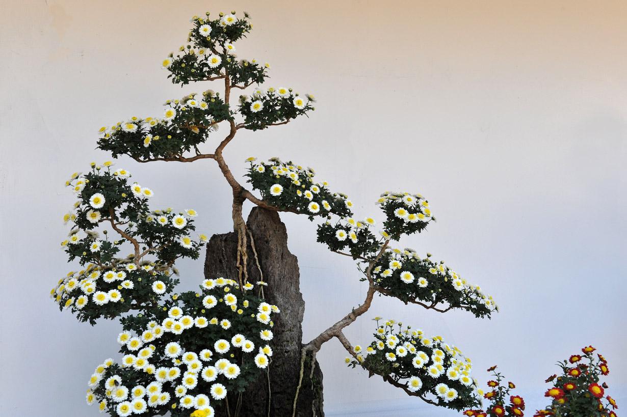 太宰府天満宮の菊盆栽 壁紙写真_f0172619_1738102.jpg