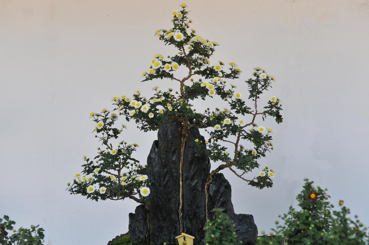 太宰府天満宮の菊盆栽 壁紙写真_f0172619_1739192.jpg