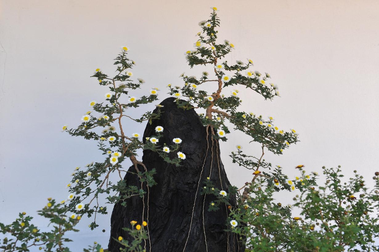 太宰府天満宮の菊盆栽 壁紙写真_f0172619_17394993.jpg