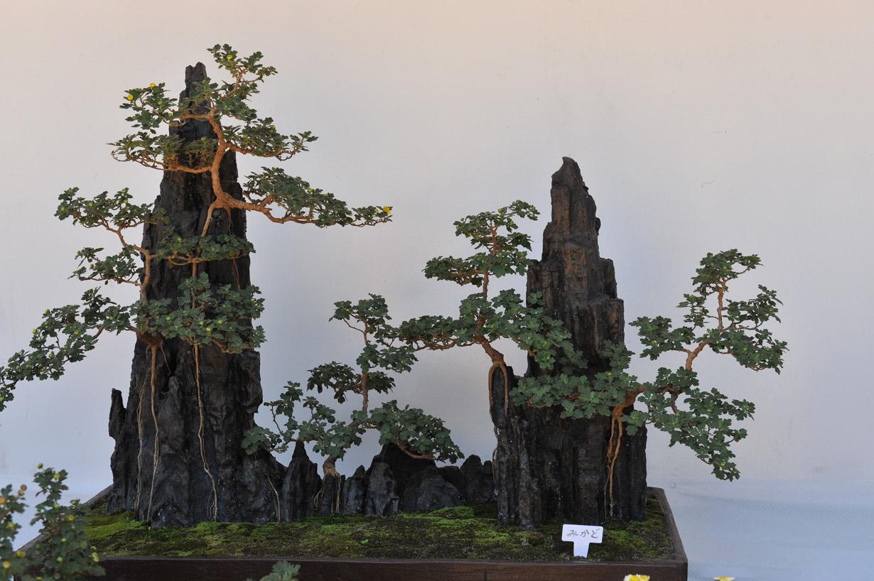 太宰府天満宮の菊盆栽 壁紙写真_f0172619_17401763.jpg