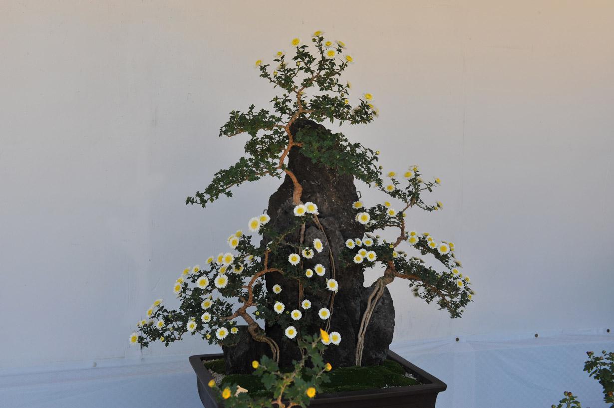 太宰府天満宮の菊盆栽 壁紙写真_f0172619_17403275.jpg