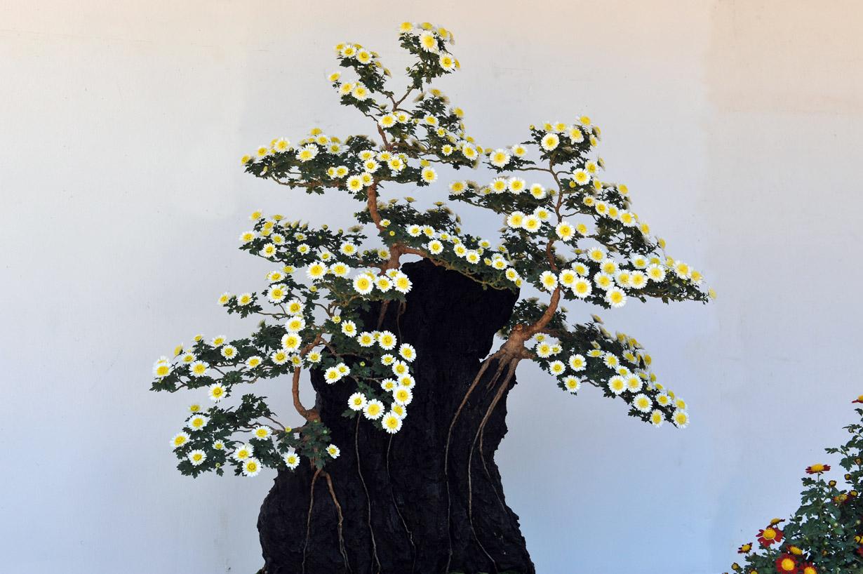 太宰府天満宮の菊盆栽 壁紙写真_f0172619_1740379.jpg