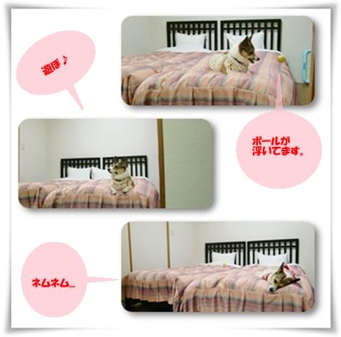 f0182121_14333988.jpg
