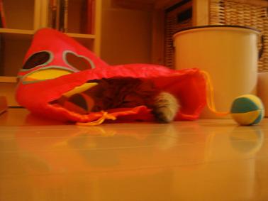 モヘアの新しいおもちゃ☆_e0157129_1942182.jpg