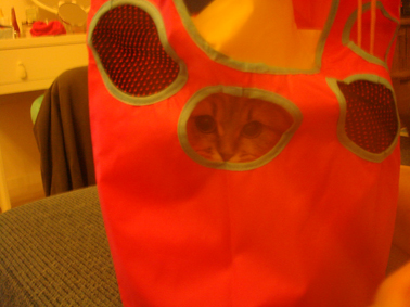 モヘアの新しいおもちゃ☆_e0157129_19431381.jpg
