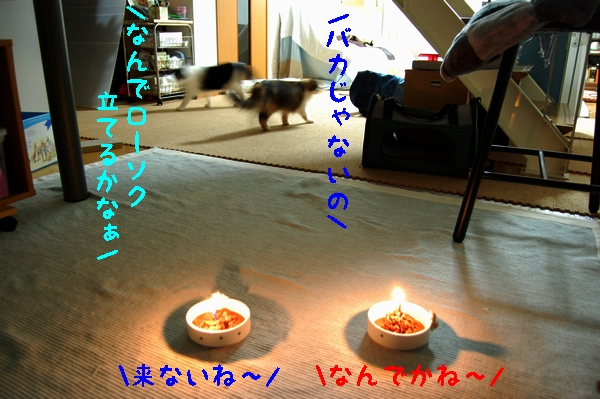 c0181639_052304.jpg