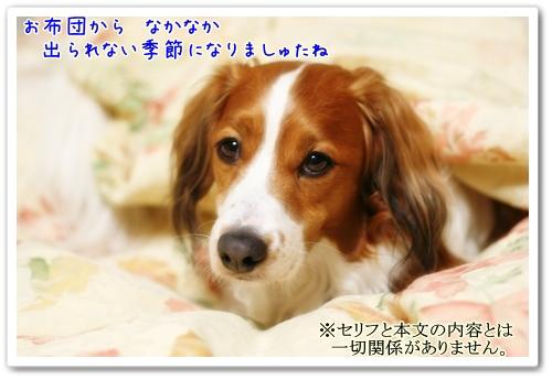 d0013149_1041430.jpg