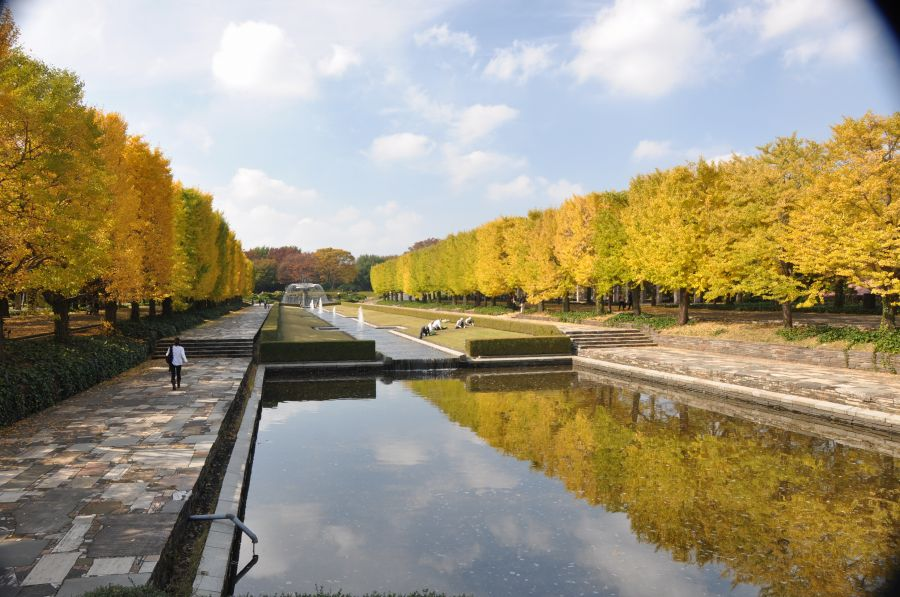 昭和記念公園・黄色い葉_c0059854_937242.jpg