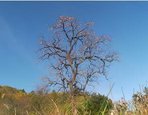 秋だ_c0207861_21554855.jpg