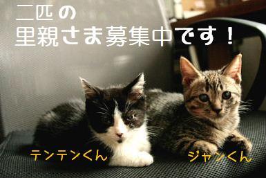 c0168570_18464637.jpg