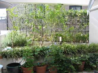 11/16   中庭テラス植栽&白塗りウッドフェンス_e0029584_21285085.jpg