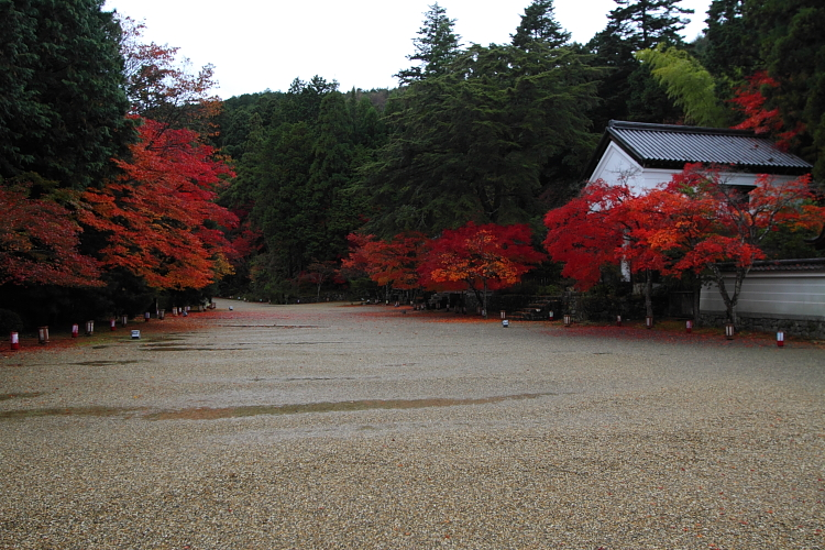 京都・洛北 秋色撮影 ~その1~_e0051888_2471597.jpg