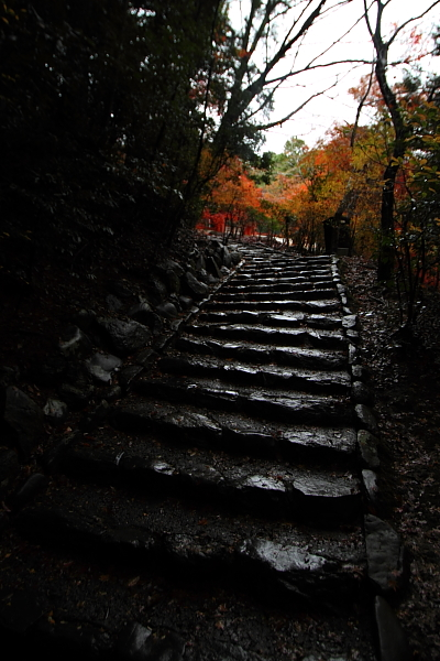 京都・洛北 秋色撮影 ~その1~_e0051888_2513835.jpg