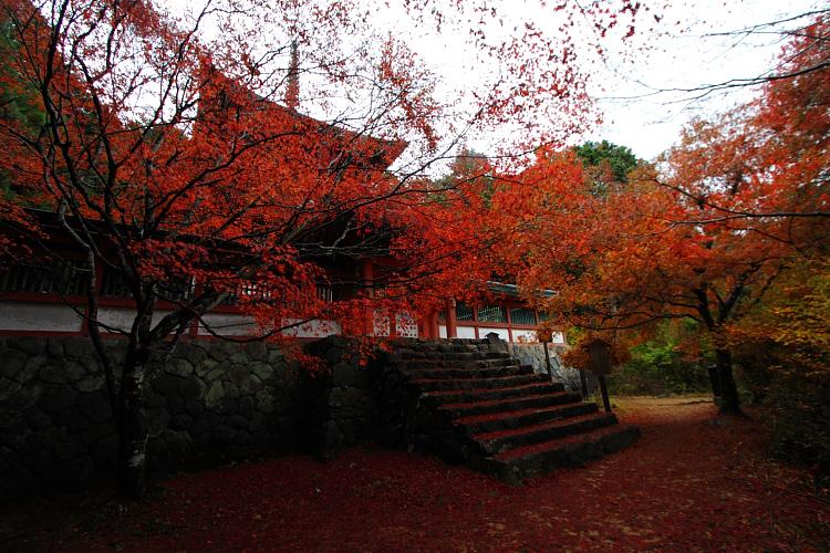 京都・洛北 秋色撮影 ~その1~_e0051888_252498.jpg