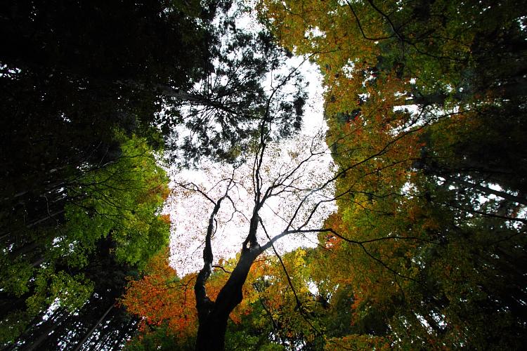 京都・洛北 秋色撮影 ~その1~_e0051888_2531238.jpg