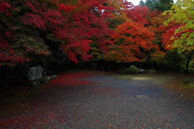 京都・洛北 秋色撮影 ~その1~_e0051888_25496.jpg