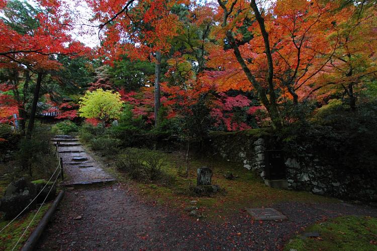 京都・洛北 秋色撮影 ~その1~_e0051888_2553613.jpg