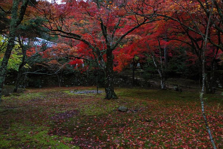 京都・洛北 秋色撮影 ~その1~_e0051888_2561731.jpg
