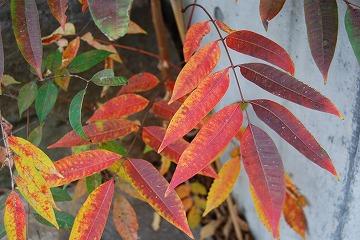 今年の紅葉…『茜色』_c0124100_13332611.jpg