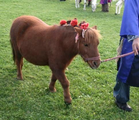 小さい馬 ポニーについてのまとめ naver まとめ