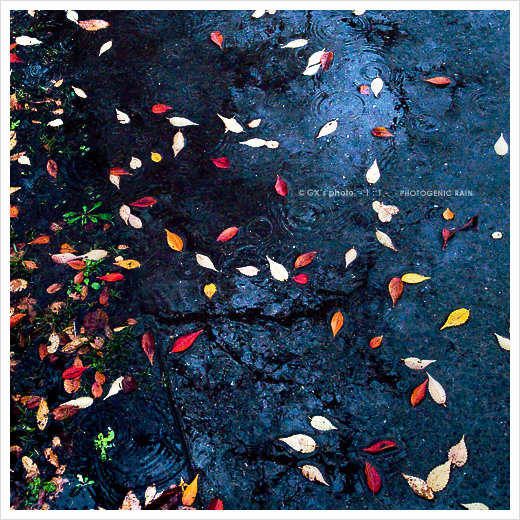 冷たい雨_e0117517_2255194.jpg