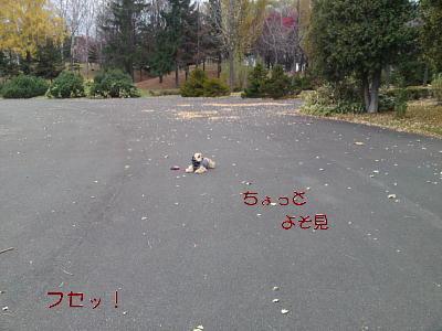 b0176428_15405580.jpg