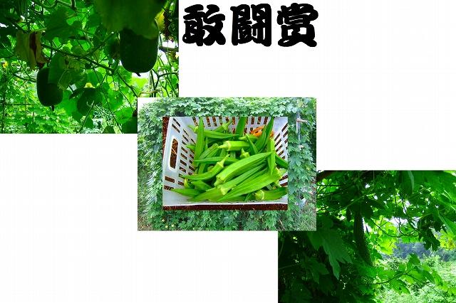 野菜つくり.....今年の優勝はだれだ!_b0137932_18305142.jpg