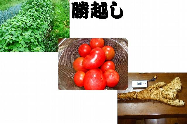 野菜つくり.....今年の優勝はだれだ!_b0137932_18313696.jpg