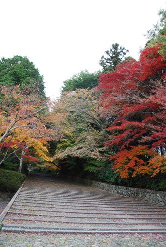 京都へ_c0099133_1423541.jpg
