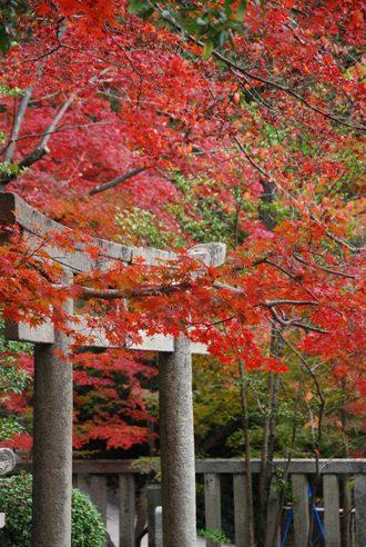 京都へ_c0099133_1424043.jpg