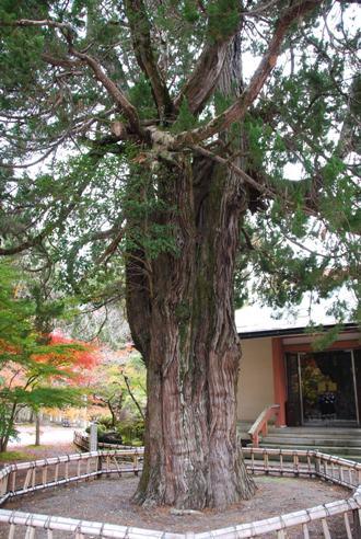 京都へ_c0099133_14241213.jpg