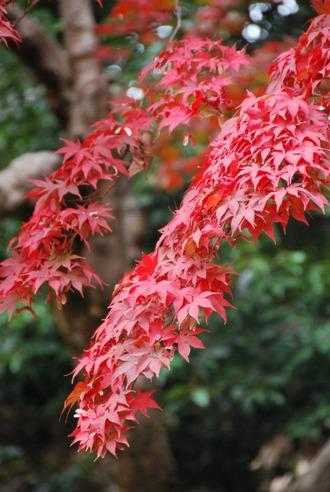 京都へ_c0099133_14245153.jpg