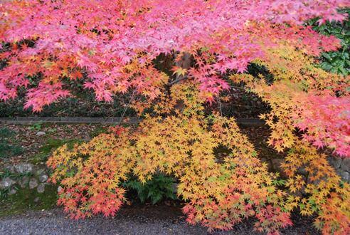 京都へ_c0099133_14251094.jpg