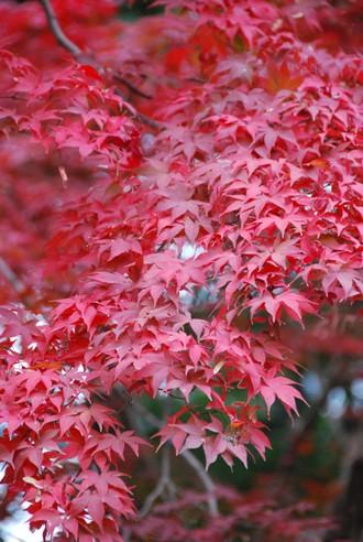 京都へ_c0099133_1425140.jpg