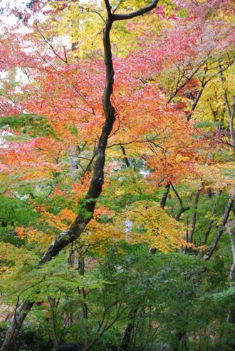 京都へ_c0099133_1426356.jpg