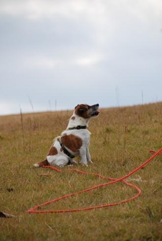 犬と紅葉 in KYOTO_c0099133_23435634.jpg