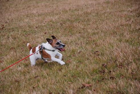 犬と紅葉 in KYOTO_c0099133_23441238.jpg