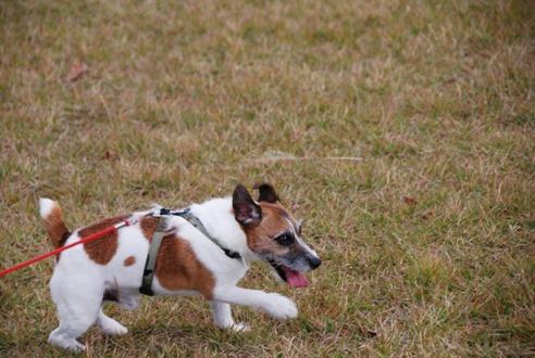 犬と紅葉 in KYOTO_c0099133_23442787.jpg
