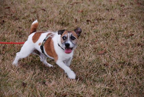 犬と紅葉 in KYOTO_c0099133_23444274.jpg