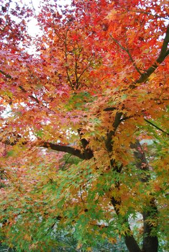 犬と紅葉 in KYOTO_c0099133_23502468.jpg