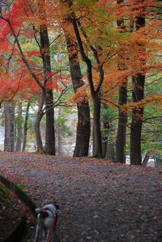 犬と紅葉 in KYOTO_c0099133_23504294.jpg