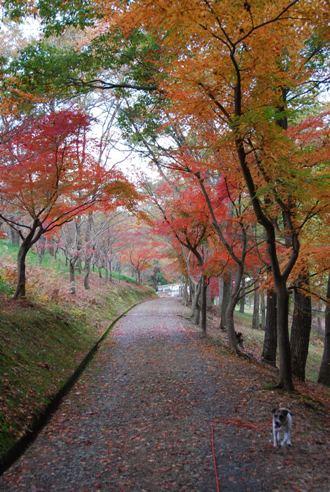 犬と紅葉 in KYOTO_c0099133_23505190.jpg
