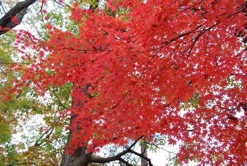 犬と紅葉 in KYOTO_c0099133_23511882.jpg
