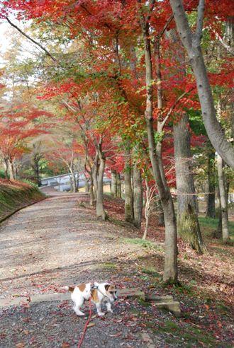 犬と紅葉 in KYOTO_c0099133_2351957.jpg
