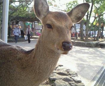 宮島旅行_a0111845_924923.jpg