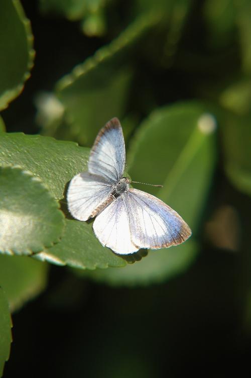 2009年11月の想い出の蝶_e0194952_19444672.jpg